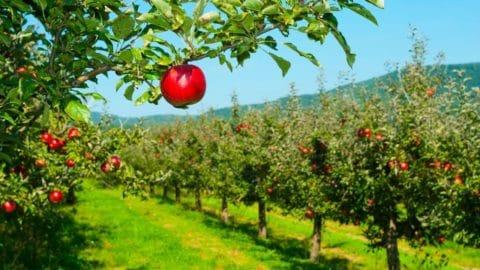 Arbeitsunfall Kühlraum Obst